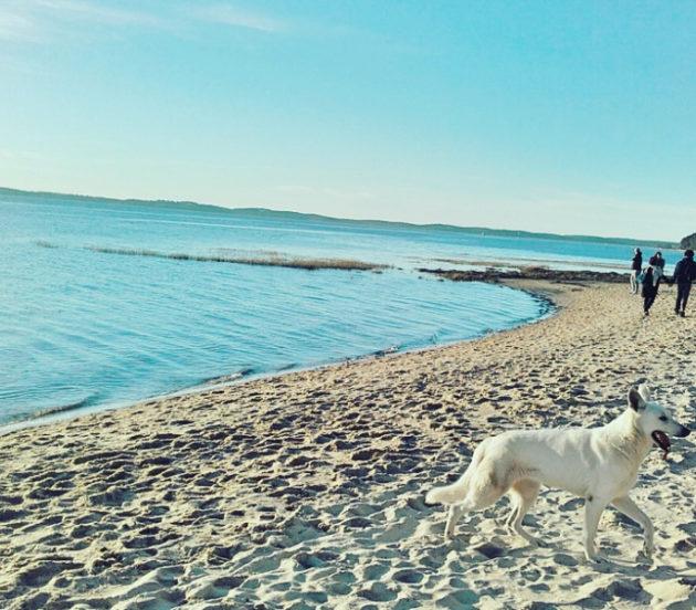 Balade sur la plage d'Arès à marée haute