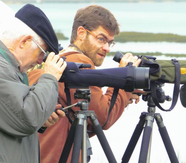 Comptage d'oiseaux avec des jumelles, avec le guide Alexandre d'Arès