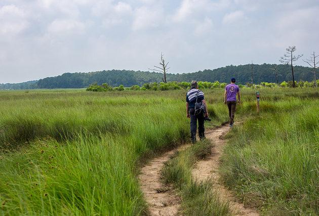 Promenade à pied entre amis pour découvrir la réserve naturelle des Prés Salés d'Arès.