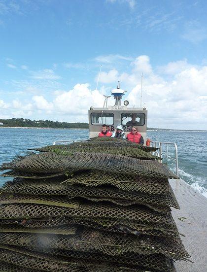 Bateau d'ostréiculteur chargé de poches d'huîtres.