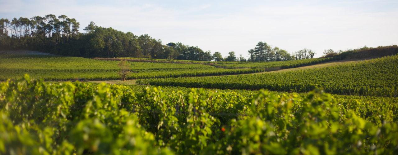 Paysage de vignobles du Fronsac en Gironde