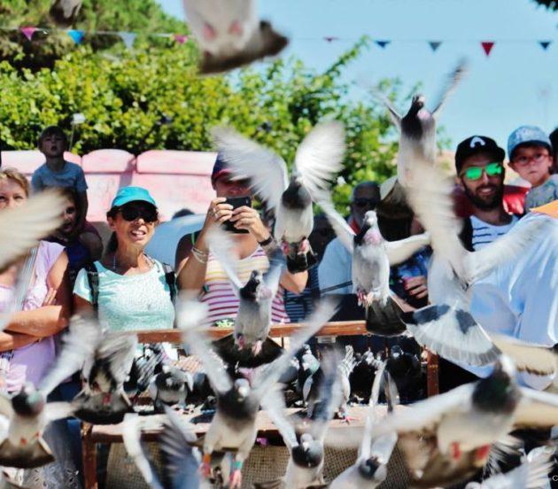Lâcher des pigeons pour l'ouverture de la Fête de l'Huître à Arès
