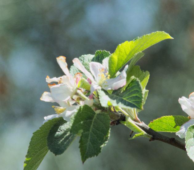 Fleur dans la réserve naturelle nationale des Prés Salés