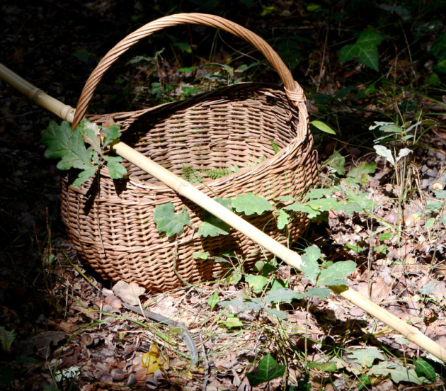 Matériel pour aller à la chasse aux champignons à Arès
