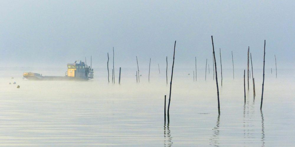 Brume sur le bassin