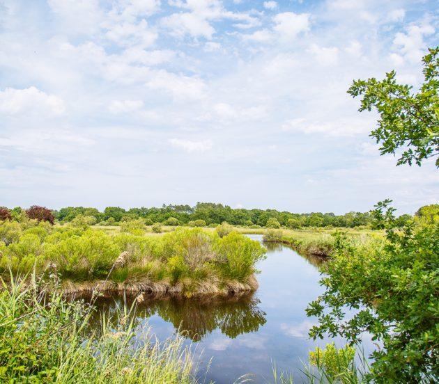 Prairies humides et réservoirs à poissons de la réserve naturelle des prés salés d'Arès