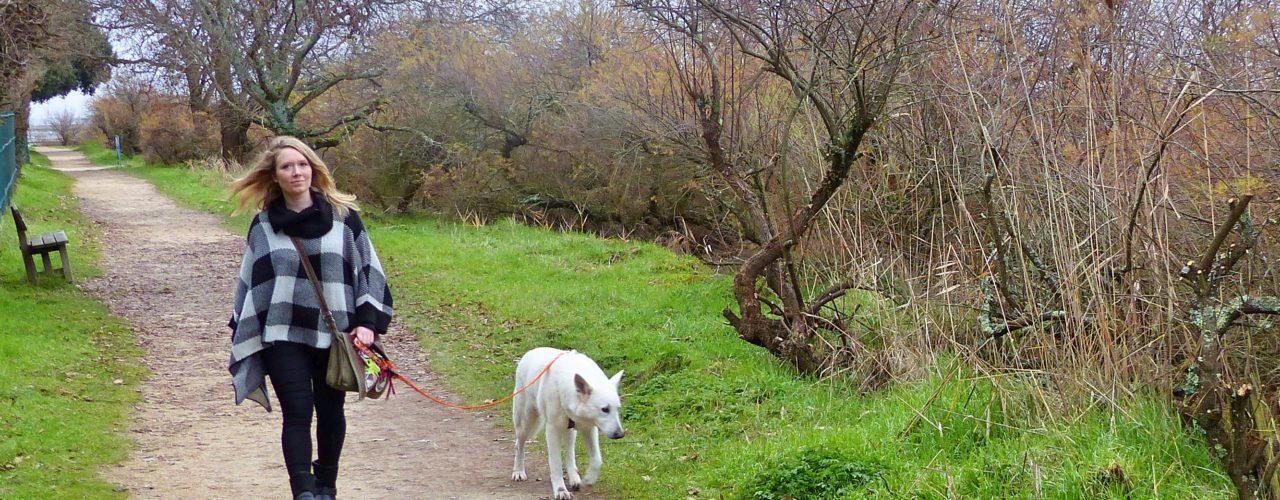 Balade en front du Bassin d'Arcachon avec son chien