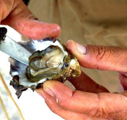 Ouverture d'huîtres sur le port ostréicole d'Arès